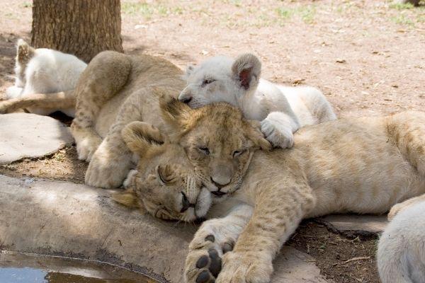 istinto animale vs instinto materno